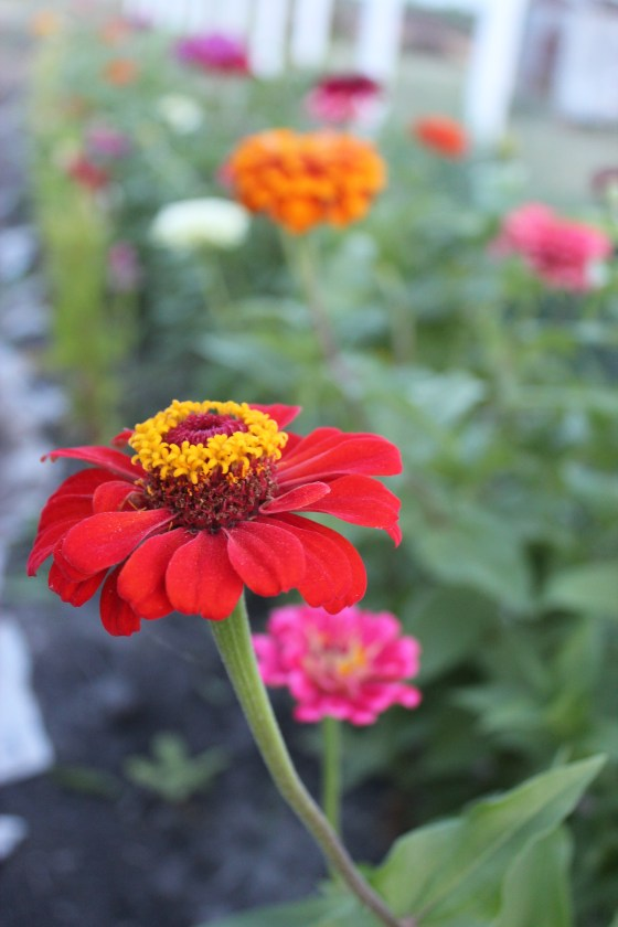 flower planting guide zone 9