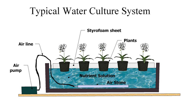 idiots guide to growing shoots in water